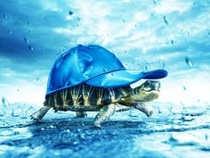 Funny Turtle Pictures Wallpaper