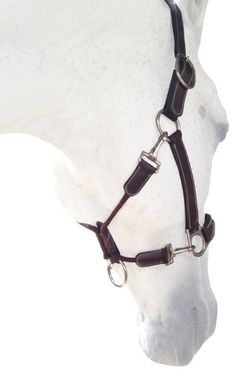 Silver Crown all-leather headcollar Beautiful Horse Pictures, Beautiful Horses, Medieval Horse, English Horse Tack, Leather Halter, Horse Facts, Horse Halters, Horse Accessories, Horse Gear