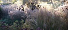 flowering labyrinth at trentham - Google Search