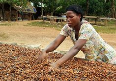 Cocoa farming in Ghana.  Hundreds of thousands of cocoa farmers are safeguarding the health of 1.86 million acres (more than 750,000 ha) of land through Rainforest Alliance training and certification.