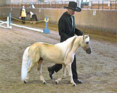miniature horses   photo courtesy of john and arlene mccallum miniature horses are