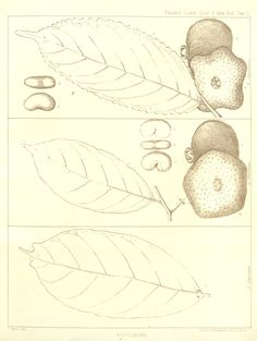 v.1: no.1-5 (1875-1878) - Transactions of the Linnean Society of London. - Biodiversity Heritage Library