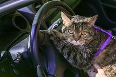 Mit der Katze auf Reisen - Tipps und Tricks - http://www.transportbox-katzen.de/mit-der-katze-auf-reisen-tipps-und-tricks/