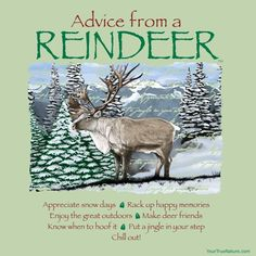 Advice from a Reindeer