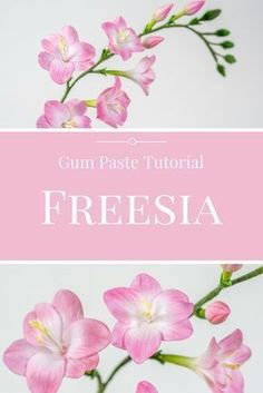 Freesia Tutorial / Gum Paste Freesia / Anleitung für Freesien #tutorial #sugarflowers #gumpaste Frosting Flowers, Fondant Flowers, Edible Flowers, Ceramic Flowers, Clay Flowers, Sugar Flowers, Fondant Flower Tutorial, Cake Topper Tutorial, Wafer Paper Flowers