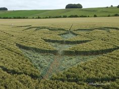 CROP circle de Ranscomb Bottom, Wiltshire  23 juillet 2016