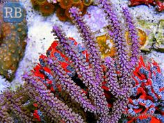 spotlight: coral reefs - kids discover   coral reef