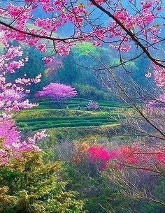 ✯ Spring