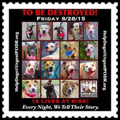 **NYC** 16 BEAUTIFUL LIVES TO BE DESTROYED 08/28/15 - 16 Dogs TO BE DESTROYED** - Click for info & Current Status: http://nycdogs.urgentpodr.org/to-be-destroyed-4915/