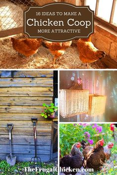 I love these ideas, they're easy to do, but improve the appearance of my coop. Great if you live in a suburban neighborhood.