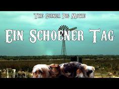 Ein schöner Tag mit süßen Meerschweinchen [Guinea Pig Movie] - YouTube #Meerschweinchen #Fun #GuineaPig #GuineaPigs