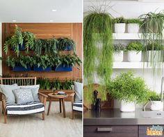 Para quem ainda tinha dúvidas, dá sim pra ter plantas dentro de casa. Dê preferência às espécies que não gostam de sol, como a Ráfis e a Zamioculca.