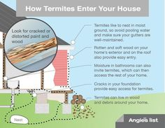 How termites enter your house