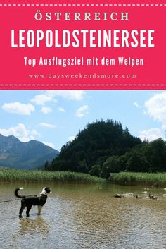 Der Leopoldsteinersee ist ein top Ausflugsziel mit dem Welpen. Schattiger Waldweg, erfrischendes Wasser und abenteuerliche Felsen. Mountains, Nature, Travel, Outdoor, Group, Board, Amazing Places To Visit, Hiking Trails, Rocks