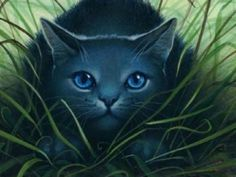 warrior cats pics | My Top Collection Warrior cats wallpapers 1