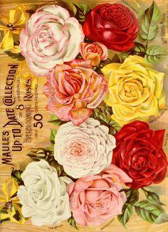 Maule's seed catalogue : 1896