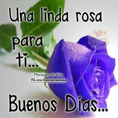 Good Morning Good Night, Superman, Spanish, Pictures, Amor, Buen Dia, Tulips Garden, Good Day Quotes, Affirmations