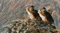 Sammakon kehitys on käytännössä kolmiosainen. Ensin on muna, sitten on toukka ja kolmanneksi sammakko.