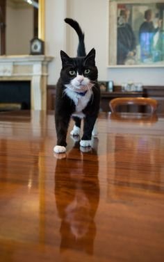The 2-year-old arrived at his new home on Wednesday and was greeted by a huge media circus outside the gates. | We Met The New Foreign Office Cat And Asked Him Five Important Questions