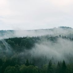 #czechrepublic #forest #mist #trees #landscape #iphonex #iphoneography #vsco #vscocam Czech Republic, Mists, Trees, Landscape, Nature, Instagram, Naturaleza, Home Decor Trees, Bohemia