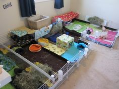 An entire room of cages! Guinea Pigs, Cage, Toddler Bed, Room, Home Decor, Child Bed, Bedroom, Decoration Home, Room Decor