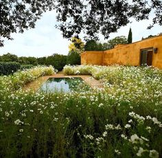 Fernando Caruncho garden. Photo by Silvia Cerrada.