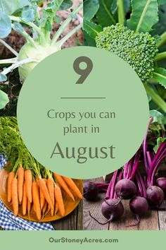 Growing Veggies, Growing Plants, Homestead Gardens, Garden Plants, Garden Gnomes, Fall Vegetables, Home Vegetable Garden, Container Gardening, Gardening Tips