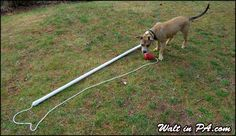 DIY Flirt Pole -I think I will try smaller diameter pvc next time so it is more flexible. The dog loved it.