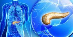 Slinivka patří k nejdůležitějším orgánům v lidském těle Health Ledger, Medicinal Plants, Weight Loss Before, Health Motivation, Holiday Travel, Healthy Weight Loss, Health Remedies, Health And Wellness, Diabetes