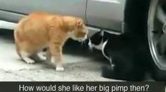 Cat betrayed his Girlfriend !! - YouTube