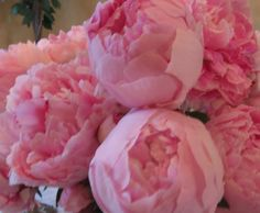 Peonies My Grandmother had these I have a bush that I got from a piece of hers:) Love them!