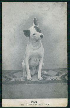 Pilu... The mind reading dog