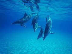 Dolphins in Key West, Florida