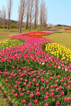Akashi Kaikyo National Goverment Park, Awaji, Hyogo, Japan