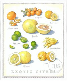 Fruits and Vegetables - John Burgoyne Studio Fruit And Veg, Fruits And Vegetables, Recipe Drawing, Botanical Drawings, Botanical Posters, Food Drawing, Fruit Art, Food Facts, Kitchen Art