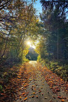 Wandern am Welterbesteig Mühldorf-Maria Laach   Wachau Inside Black Panther, Trekking, Vineyard, Country Roads, Outdoor, Europe, Slovenia, Hiking Trails, National Forest