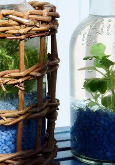 DIY – Wasserpflanzen in der Flasche