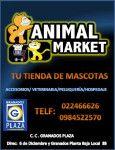 Animal Market Pet Shop Grandes descuentos para tu Mascota - Akyanuncios.com - Publicidad con anuncios gratis en Ecuador