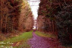 Alice Corley PhotographyBeautiful Ireland Photography     The walk into Moore Hall Co Mayo.  Moore Hall, or Moorehall, the house & estate of George Henry Moore and family, is situated in the barony of Carra, County Mayo in a karst limestone landscape. The Moores were an aristocratic Irish family who built Moore Hall between 1792 and 1795. The first Moore of Moore Hall was George Moore, a name borne by many members of the family down the generations.  (cont'd in comments)