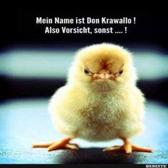 Don_Krawallo.jpg von Edith auf www.funpot.net
