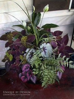 Spathiphyllum, japanese painted fern, begonia, coleus Unique by Design l Helen W… - Container Gardening Container Flowers, Container Plants, Container Gardening, Gardening Tools, Container Design, Gardening Gloves, Gardening Supplies, Vegetable Gardening, Japanese Painted Fern