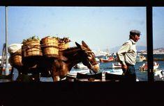 donkey carrying baskets in Mykonos, Greece Holland America Cruises, Holland America Line, Mykonos Greece, Donkey, Camel, Baskets, Ship, Dogs, Animals