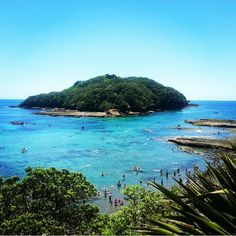 Goat Island, New Zealand. Great place for snorkeling