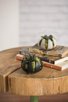 Indoor Succulent Garden - Lily Pad Succulent Planter | Gardeners.com