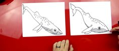 How To Draw A Whale - Art for Kids Hub