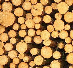 Pour découvrir l'état des lieux de la filière bois dans le Nord-Pas de Calais, rendez-vous sur le blog Urbawood www.urbawood.fr