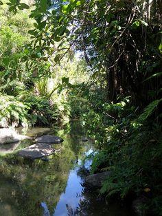 Waitakere Ranges, Auckland, New Zealand - THE DREAM