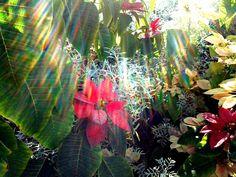 Raios de Sol sobre as flores Natalinas