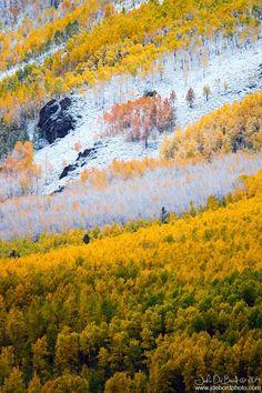 Later Autumn Snowfall #nature