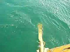 GL-Laboのろかいの実験・研究活動 Boat Building, Rowing, Water Crafts, Sailboat, Boats, Sailing, Waves, Projects, Outdoor